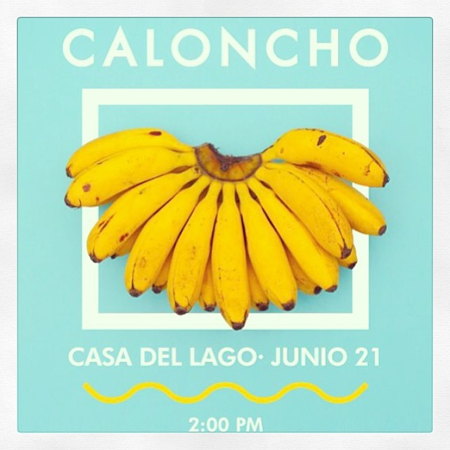 Calonchocasa